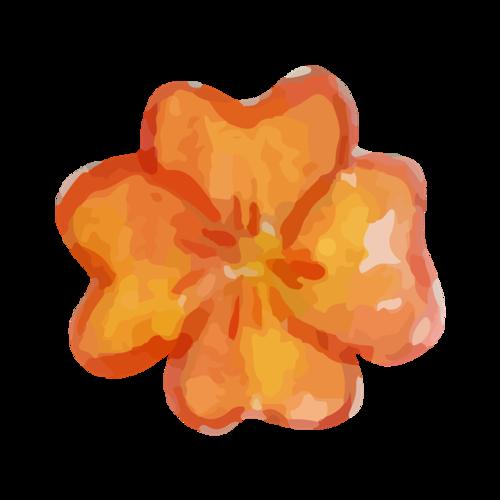 水彩植物花卉
