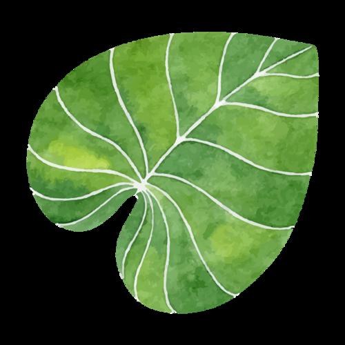 手绘水彩叶子