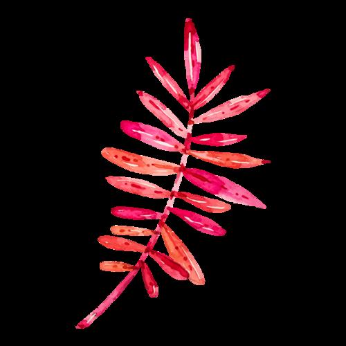 粉色树叶矢量图