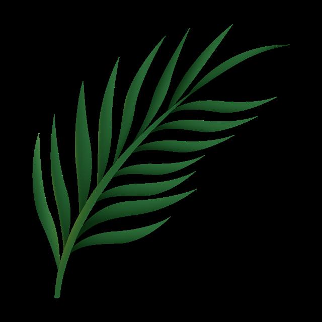 热带棕榈叶图片