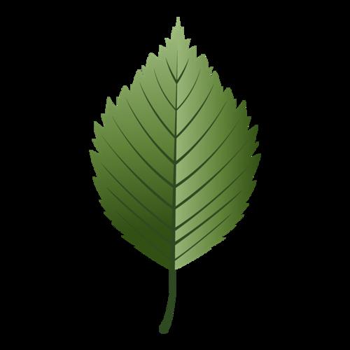 绿叶矢量图片