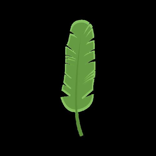 芭蕉叶植物矢量图