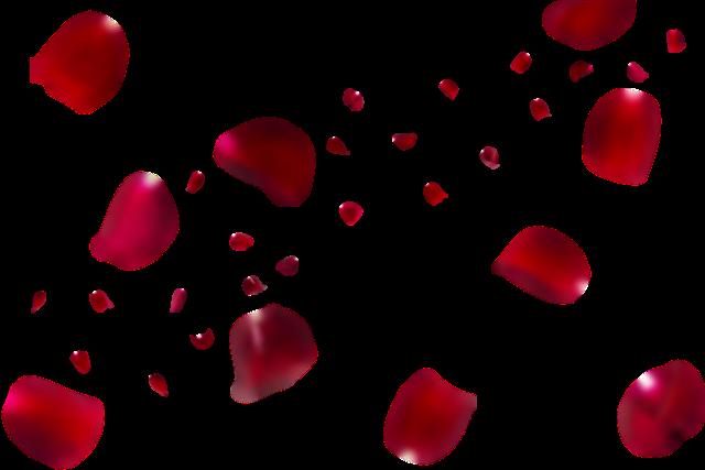 红色花瓣飘落