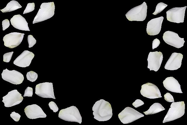 白色花瓣漂浮